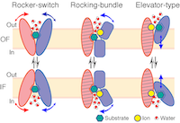 Review on Membrane Transporters